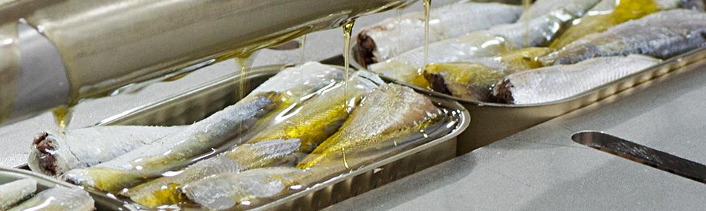 Llenado con aceite de oliva de las sardinillas