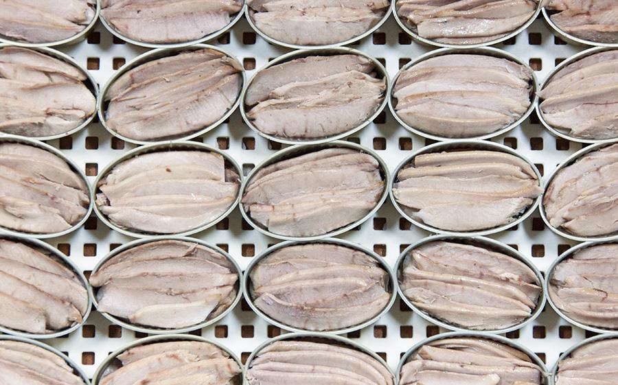 Ventresca envasada lista para el llenado con aceite de Oliva